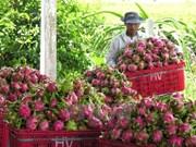 今年前9个月越南蔬果行业实现顺差31亿美元