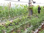 宁平省人民议会第37号决议:着力促进农业高新技术产业发展