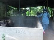河内市介绍非洲猪瘟的防范措施