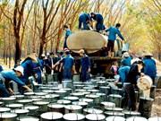 越南成为世界天然橡胶第三大出口国