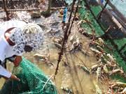 越南鼓励企业养殖半咸水虾