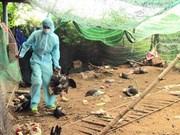 越南富安省发现一处H5N6禽流感疫情区