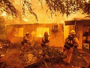 越南驻美国大使馆:美国加州森林大火事故中尚未有越南人伤亡报告
