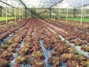 荷兰分享发展高科技农业的经验