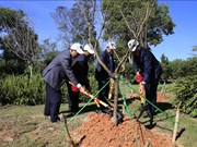125棵日本樱花树在林同省大叻市植下