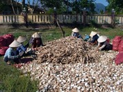 越南对韩国木薯出口额猛增