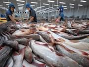 安江省查鱼产量猛增