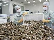 加拿大是越南富有潜力的虾类出口市场