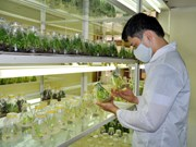 推动农业农村科技应用的研讨会在河内举行