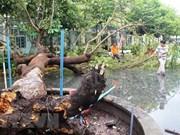 越南各地加快第九号台风灾后恢复重建