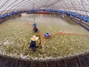 越南首家疾病安全虾苗繁育场正式亮相