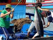 越南金枪鱼出口回升