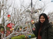 """2018年沙巴冬季狂欢节:登上西北高山体验""""欧洲""""风情"""