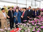 越南国会主席阮氏金银在兴安省新农村乡调研