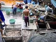 """泰国对欧盟把该国从""""预备违法捕鱼国""""名单中删除表示欢迎"""