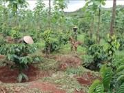 越南努力开展地区消饥减贫工作