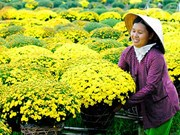 九龙江三角洲进入花卉丰收季节