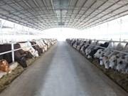 和发贸易有限公司成为越南最大牛肉供应商