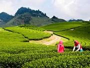 越南政府副总理批准《山罗省木州国家旅游区建设总体规划》