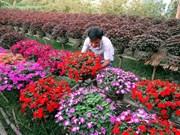 号称花卉王国的槟知省花卉种植区百花绽放迎新春