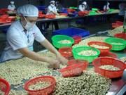 越南腰果加工和出口量独居世界第一