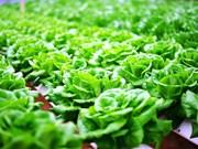 推进绿色农产品生产   机遇与挑战并存