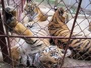 严厉打击贩卖野生动物的非法交易行为
