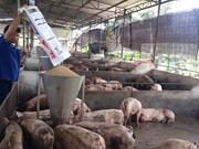 同奈省多措并举推动畜牧业提质增效
