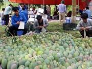 山罗省农产品逐步走出国门 远销世界各地