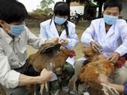 越南批准2019-2025年阶段防控禽流感国家行动计划