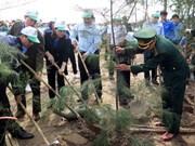 南定省在该省沿海地区种植3000棵树共同建设美丽家园