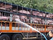 非洲猪瘟病毒传入越南的风险较高