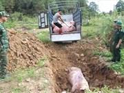 越南兴安和太平两省发现非洲猪瘟疫情