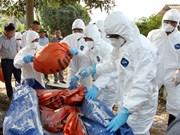 阮春福总理指示采取紧急措施控制非洲猪瘟疫情