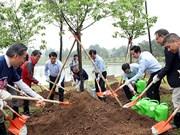 在河内和平公园新种1000棵樱花