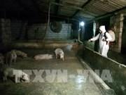越南全国多地采取配套措施 全力防控非洲猪瘟疫情