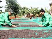 提高咖啡价值和发展西原经济区