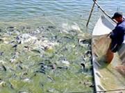 2019年水产业努力实现查鱼出口额达24亿美元的目标