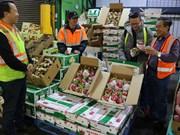 越南多措并举推动蔬果行业高质量发展