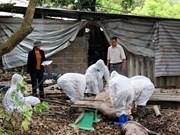 越南莱州省出现首例非洲猪瘟