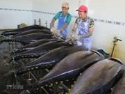 2019年越南金枪鱼出口目标为10亿美元