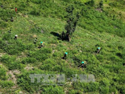 2020年承天顺化省森林覆盖率将达57%
