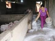 """FAO建议越南宣布进入""""非洲猪瘟紧急状态""""这一消息是不属实"""