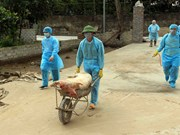 越南成立防控非洲猪瘟国家指导委员会