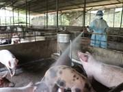 越南农业与农村发展部长:尽最大努力防止非洲猪瘟扩散到南方地区