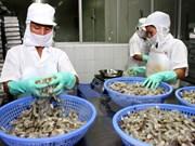 努力提升越南虾产业的竞争力