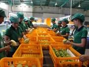 中国是越南芒果的最大出口市场