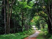 越南发布全国森林现状报告