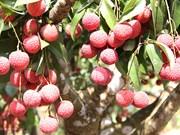 北江省着力提升农业产业价值