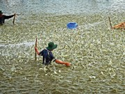 着力开展核心措施  努力实现虾类出口额达42美元的目标